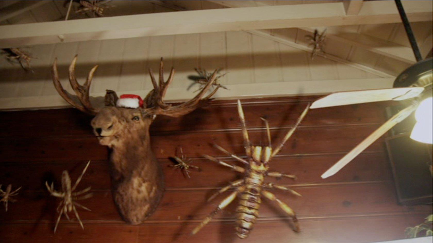 similar galleri... Giant Camel Spider Size