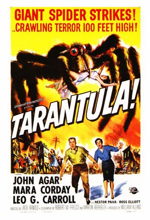 Tarantula - MoMA Postcard